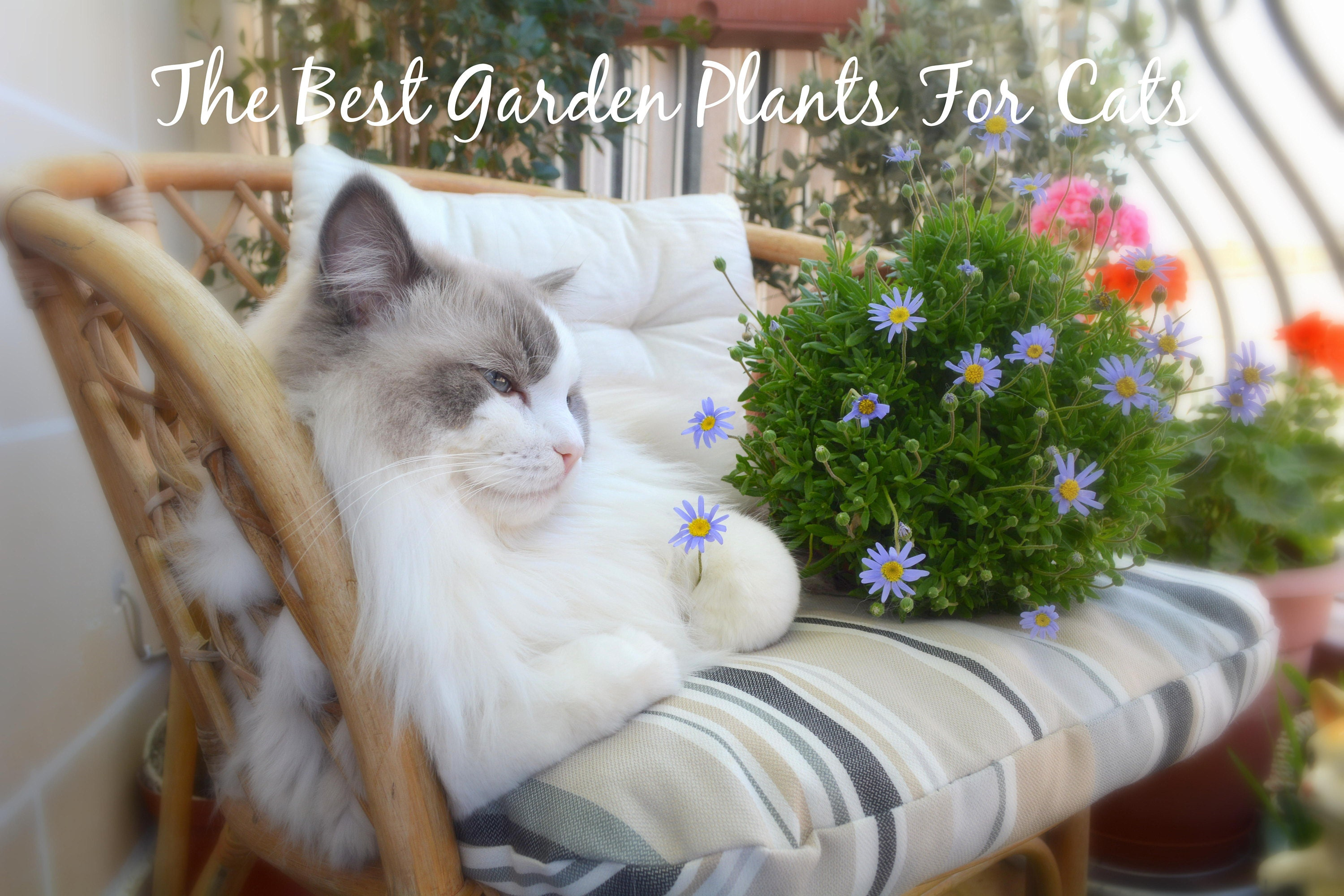 The Best Garden Plants For Cats