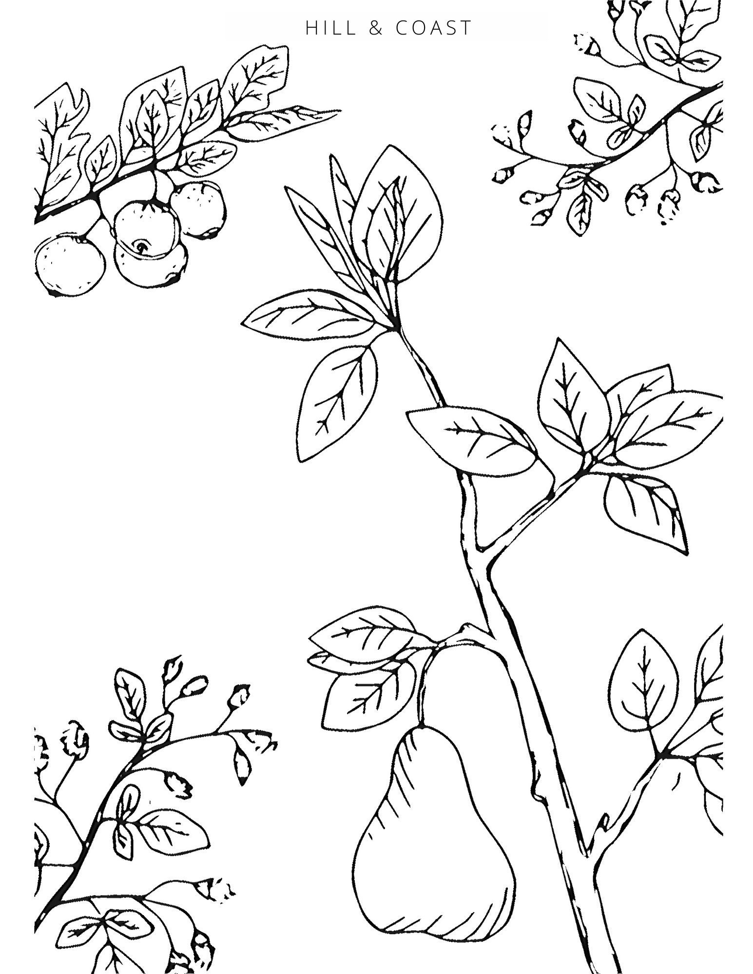 Peace Pears Coloring Page, by Hill & Coast
