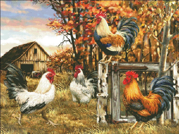 Rooster Farm