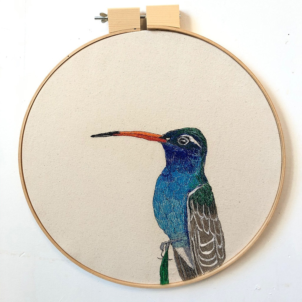 """Cynanthus latirostris (Broad-billed Hummingbird)"