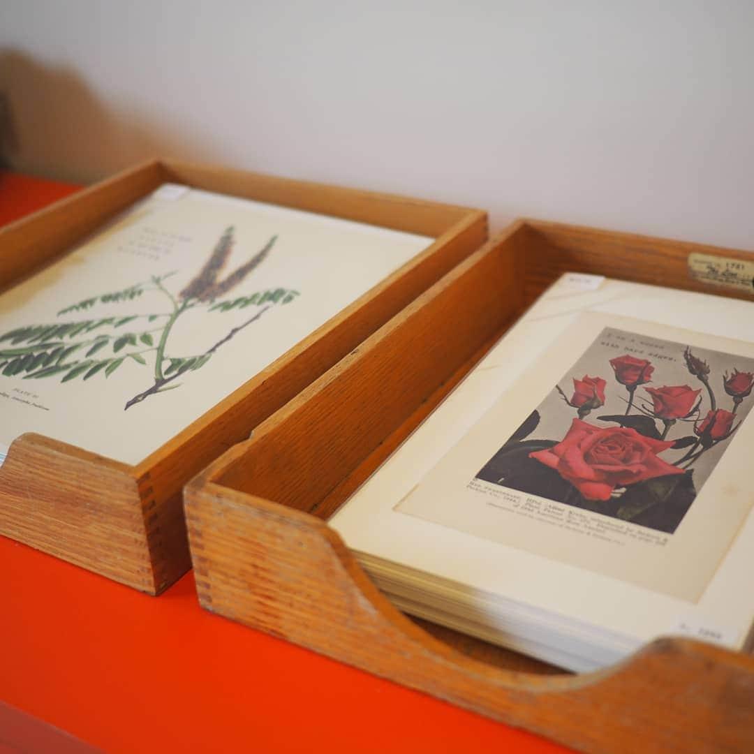 Prints sorted in vintage trays