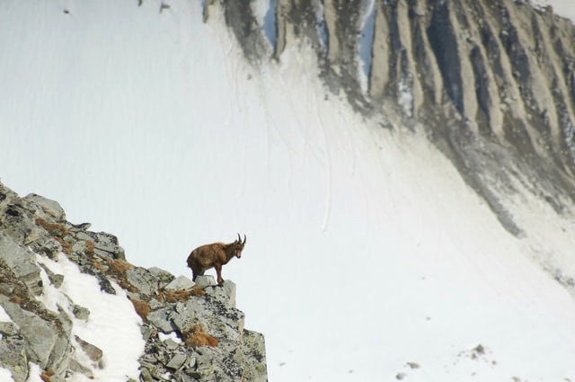 john darnielle of the mountain goats