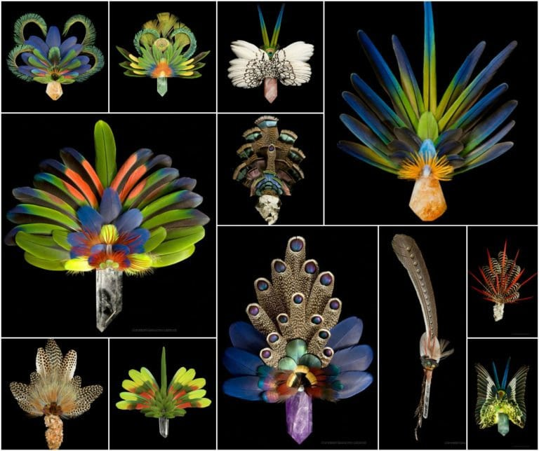 Feather arts