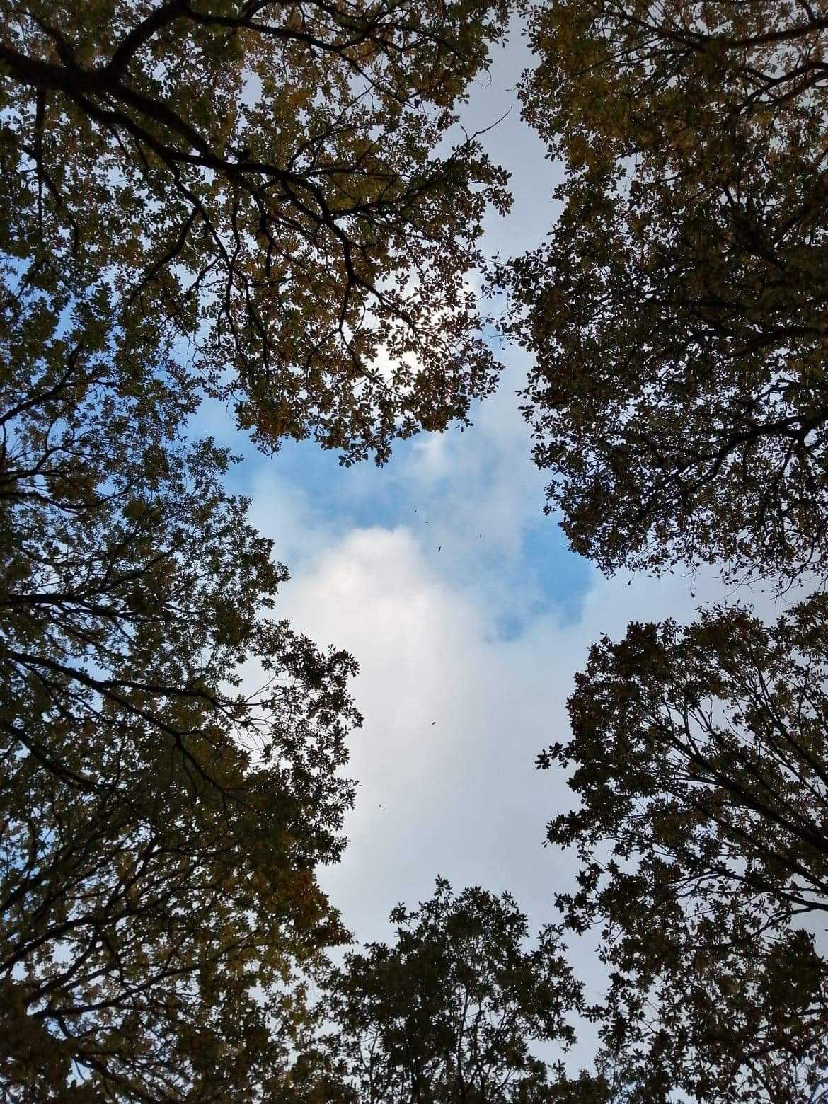 The sky through the trees, Abergorlech, Brechfa Forest