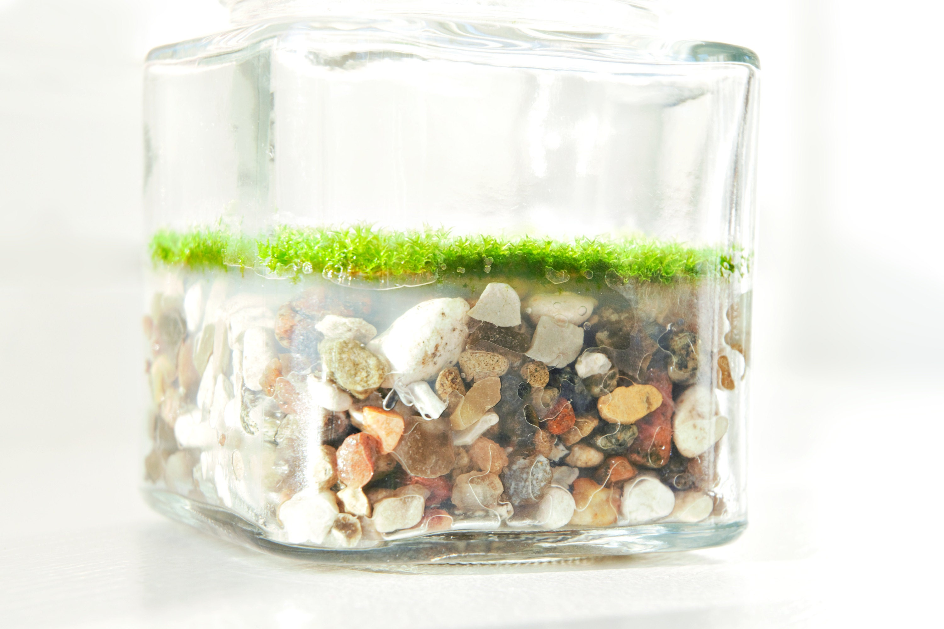Square jar with moss