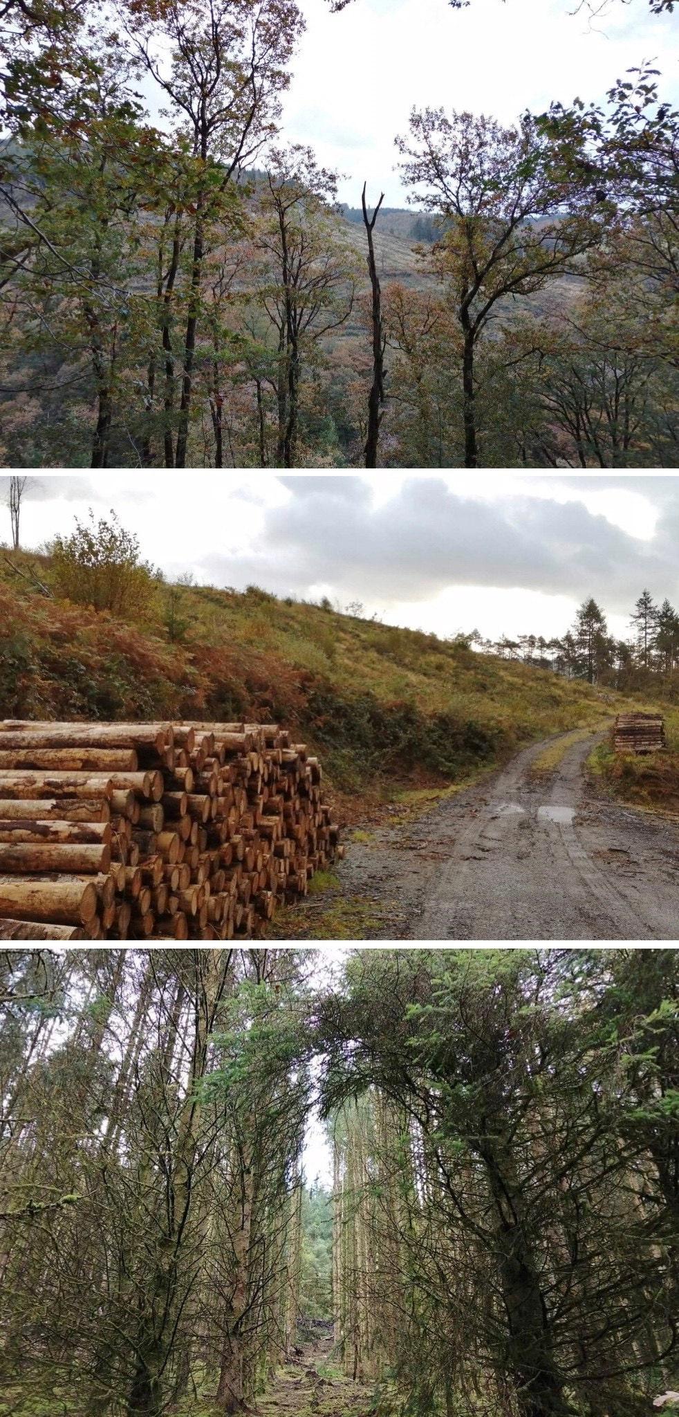 Woodland management in Abergorlech, Carmarthenshire, Wales
