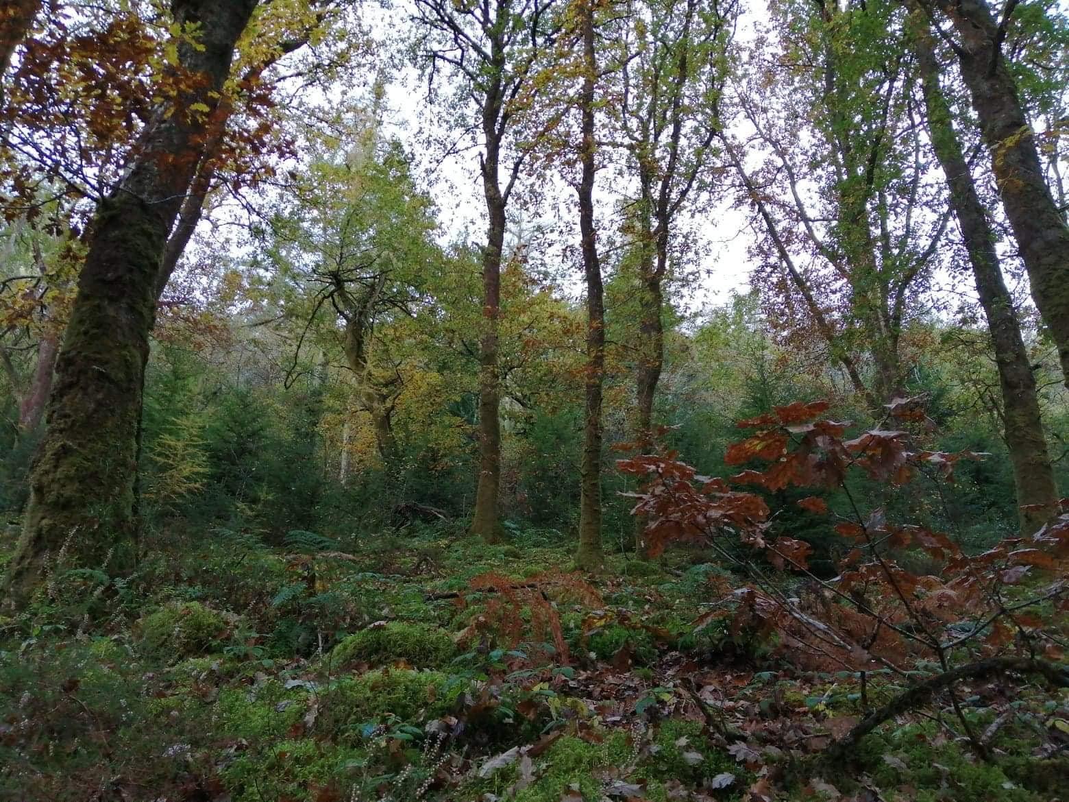 Brechfa Forest, Abergorlech, Carmarthenshire, Wales