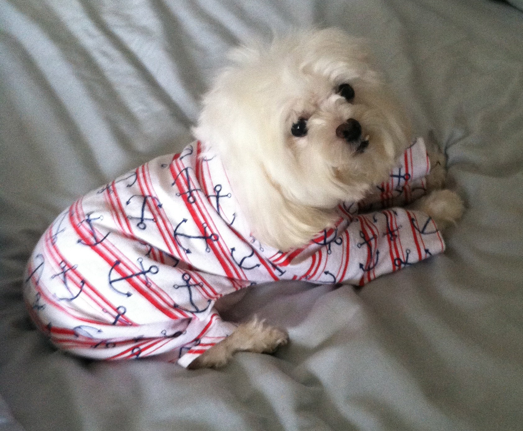 Whirly wearing dog pajamas