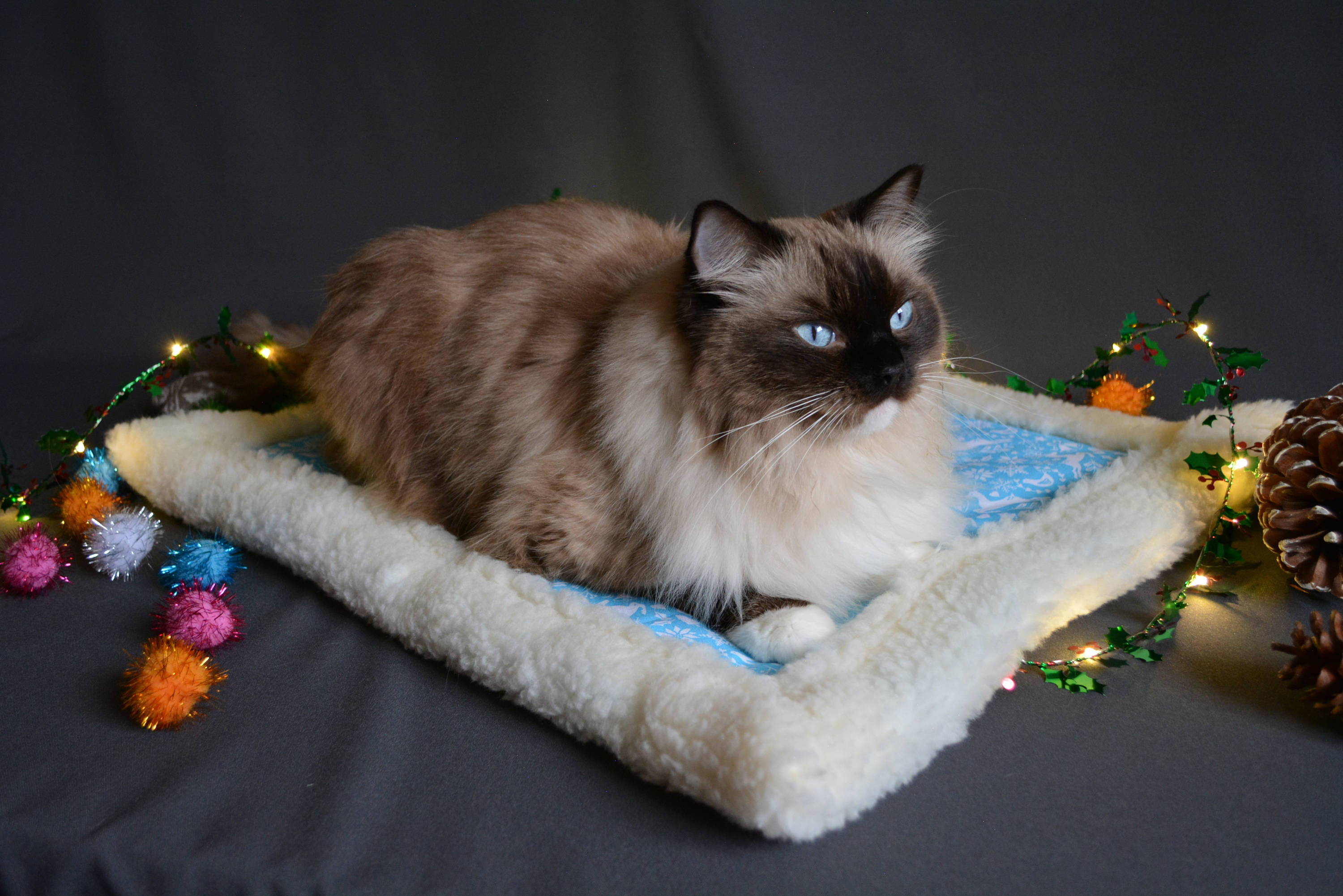 Cat Christmas blanket