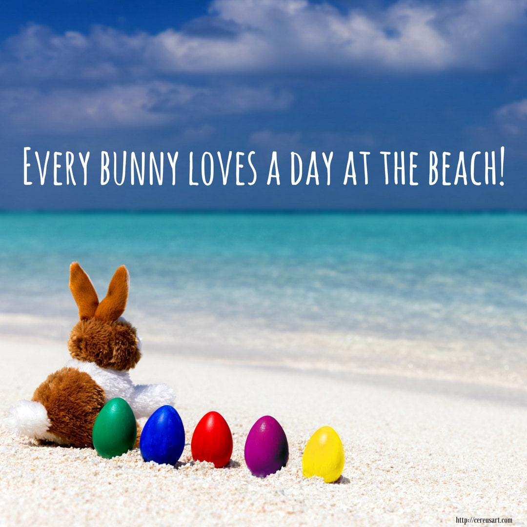 Every bunny loves a day at the beach!