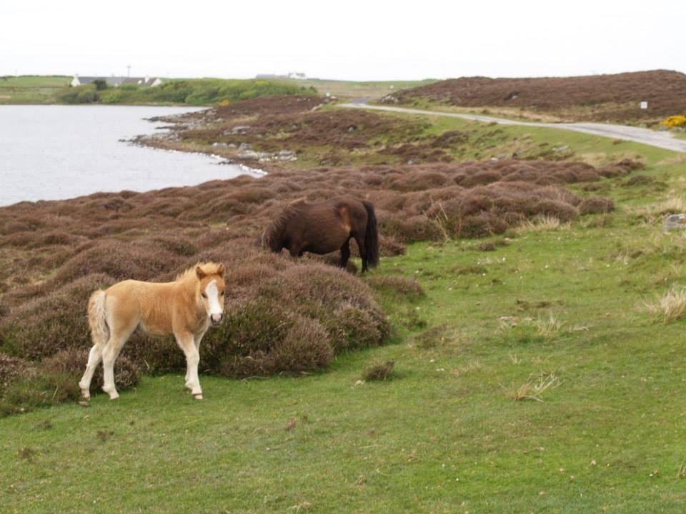 foal and mum