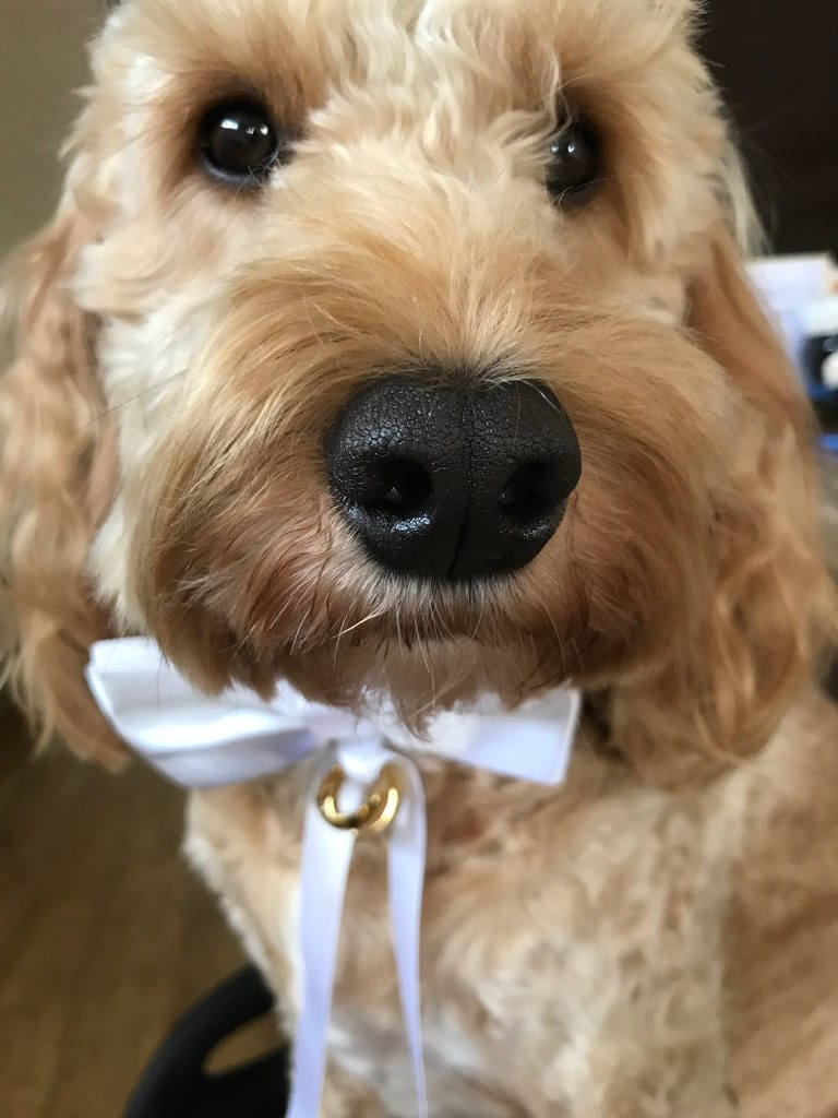 Ring bearer, weddings, proposals, Valentines