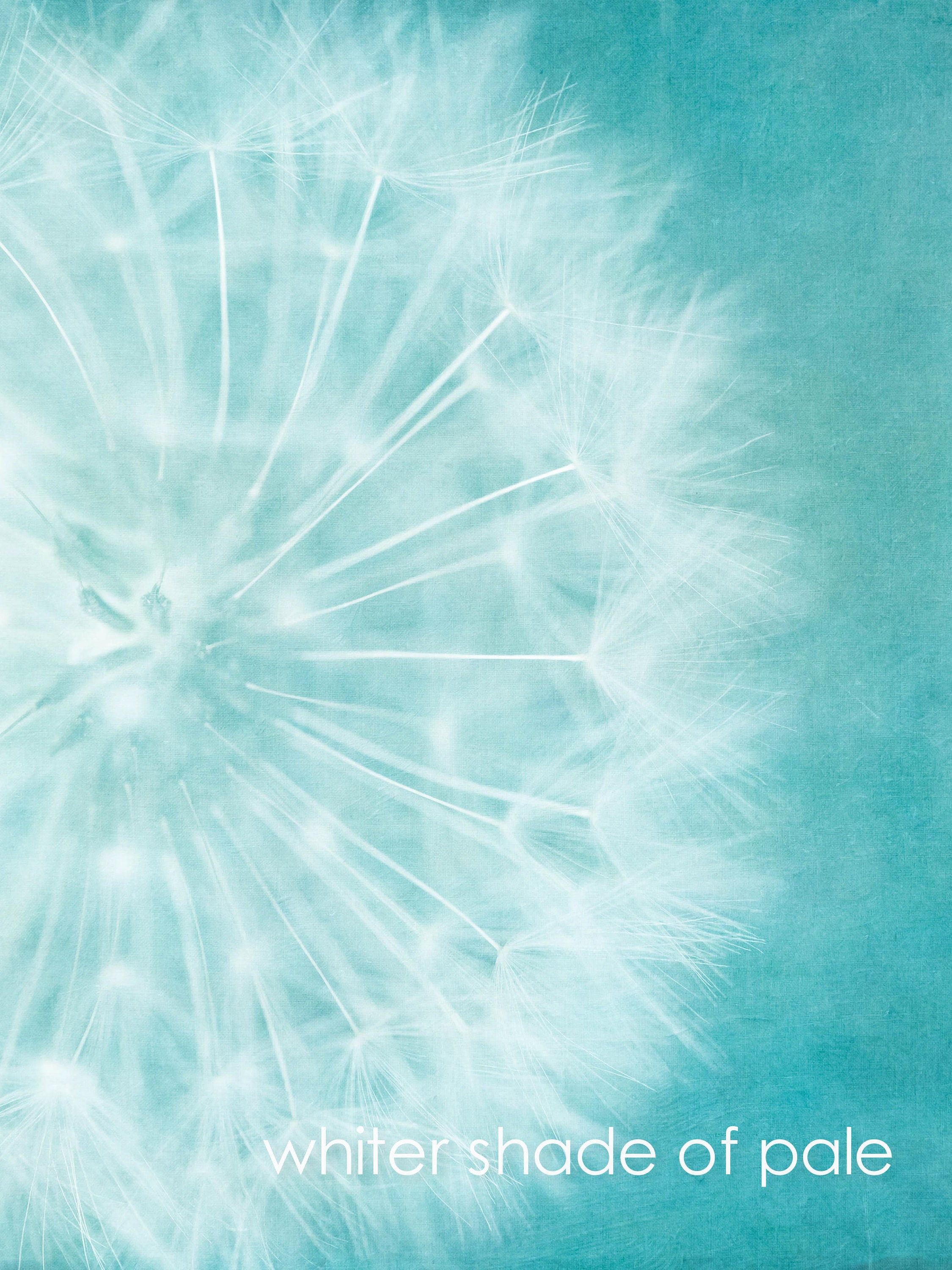garden lover gift of dandelion fine art print and wall art with green blue background