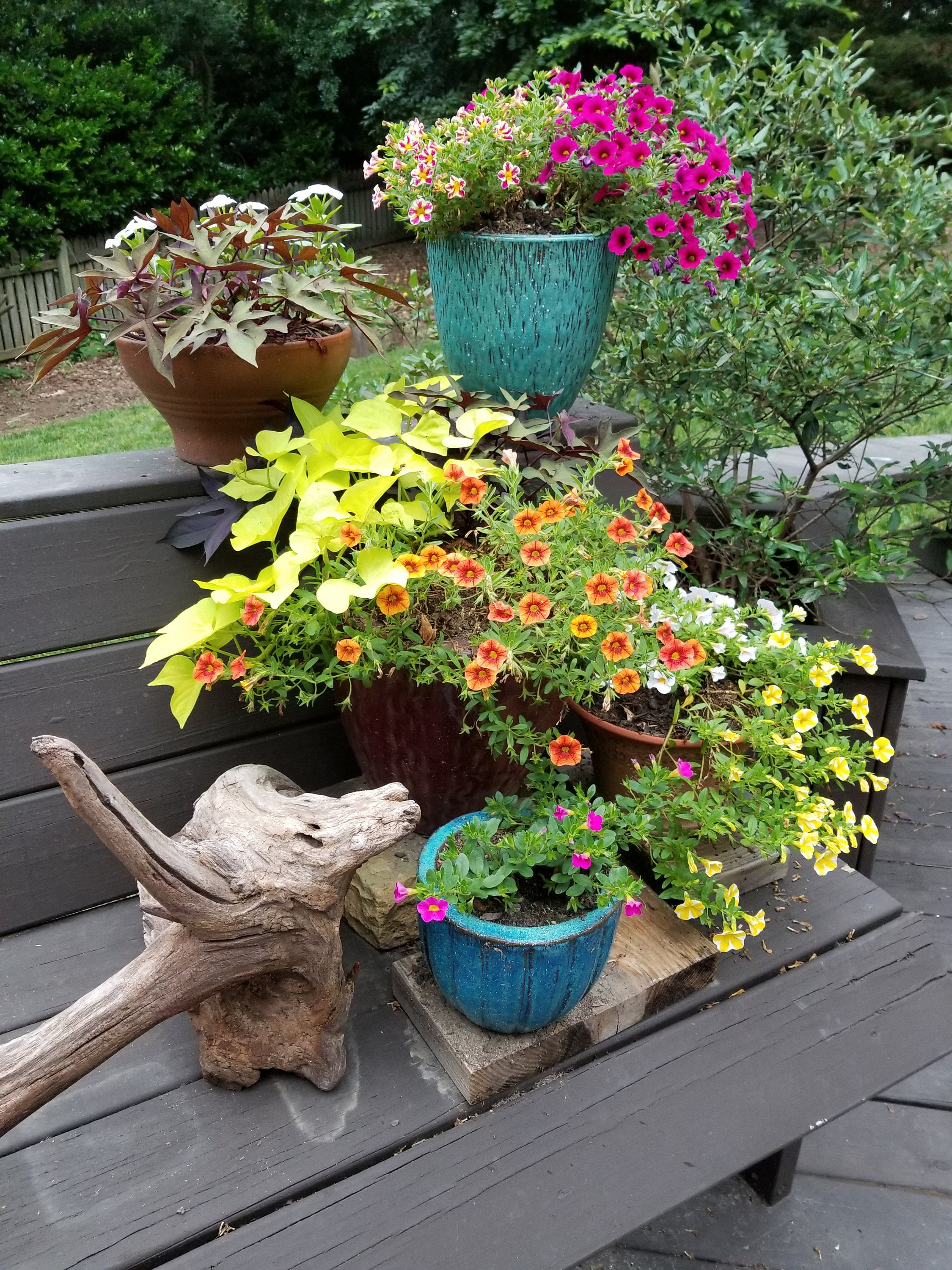 Driftwood root with a mix of tiered potted plants on the deck