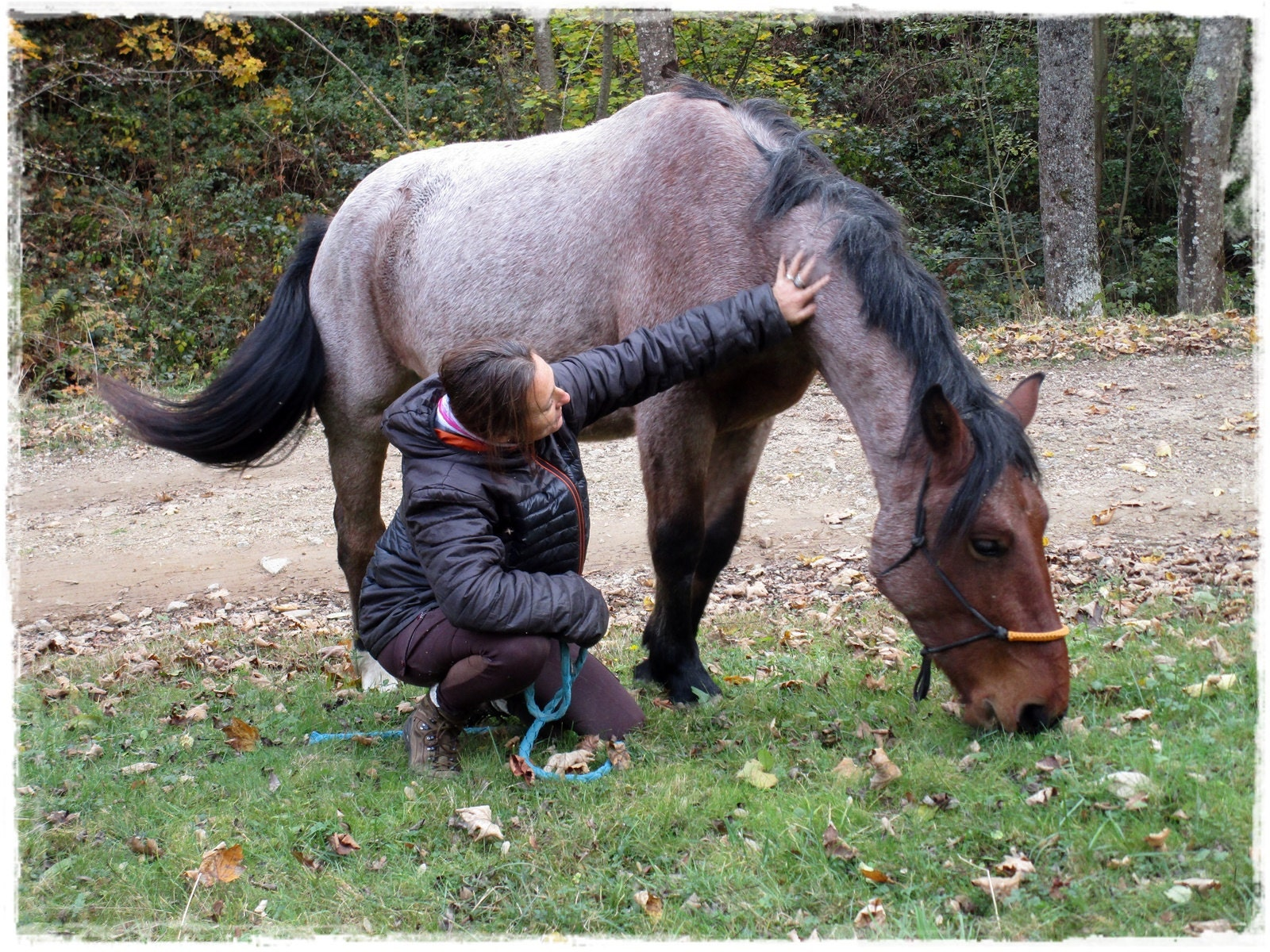 Le cheval dans la nature - horsemanship - éthologie