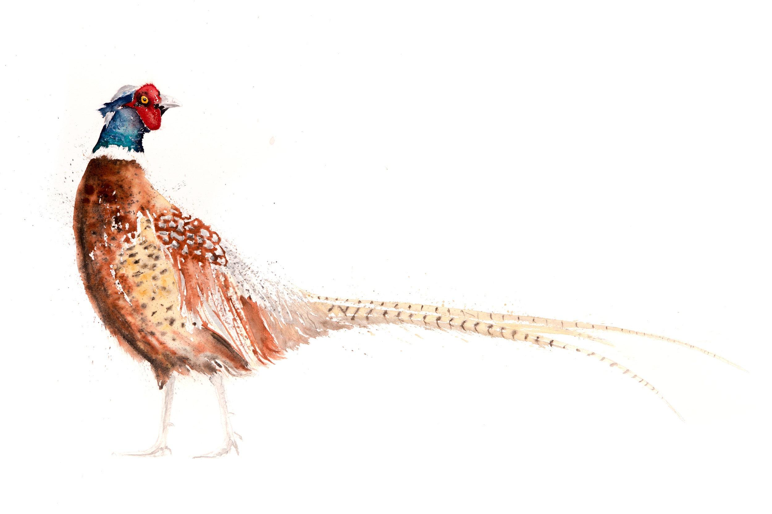 Pheasant watercolour painting