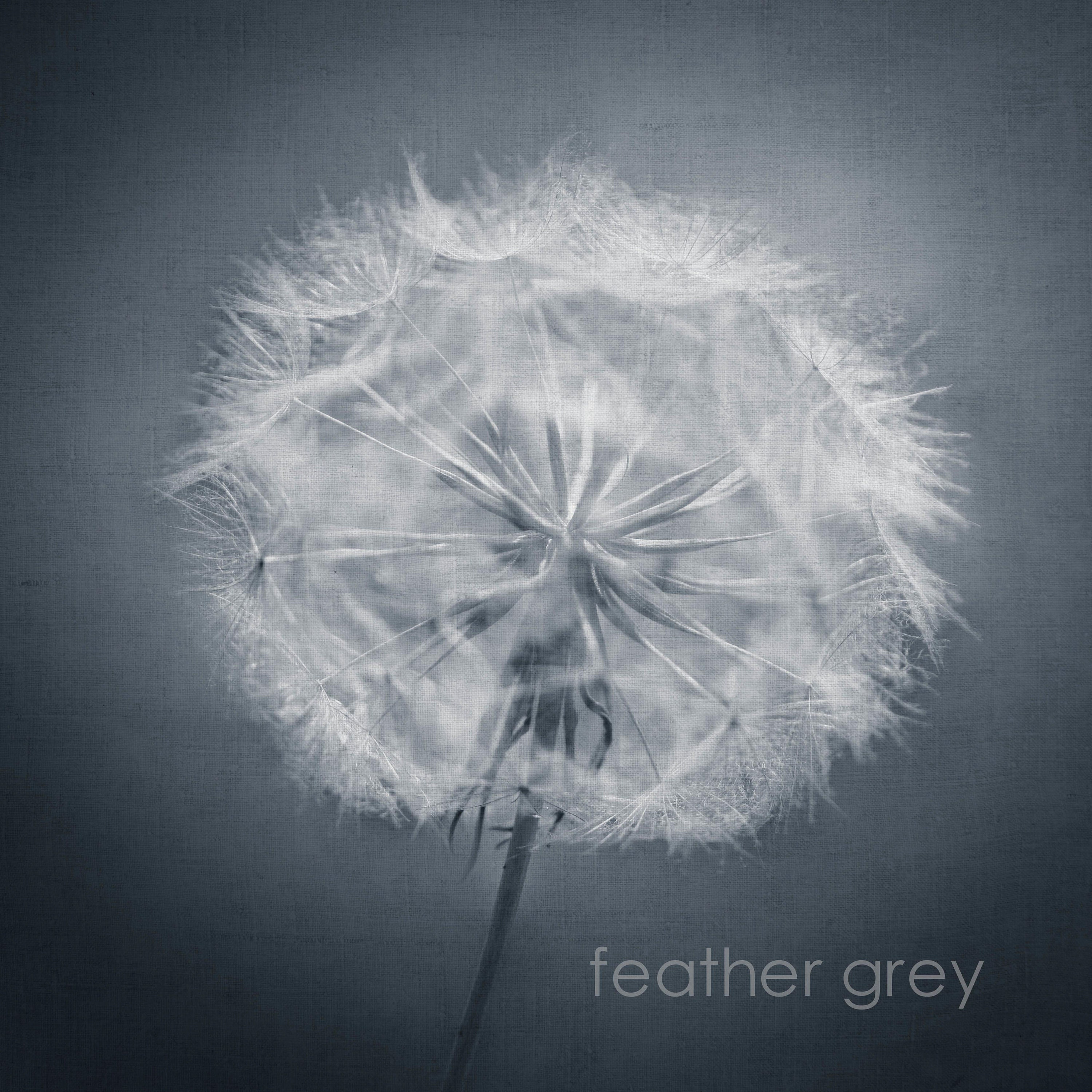 gardening gift- black and white fine art print of dandelion clock seed head- available in custom sizes and unframed or ready to hang