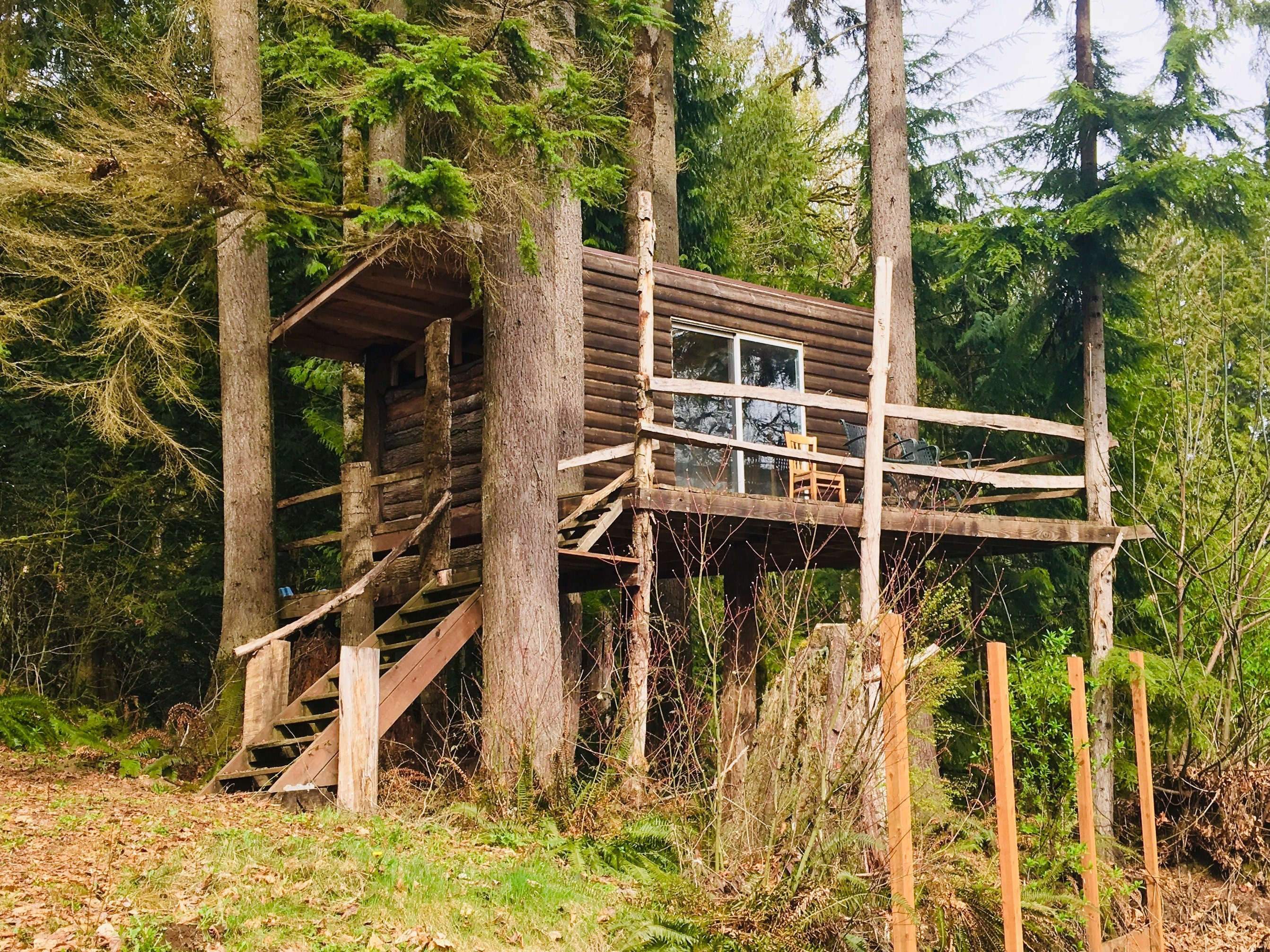 Treehouse renovation - the before