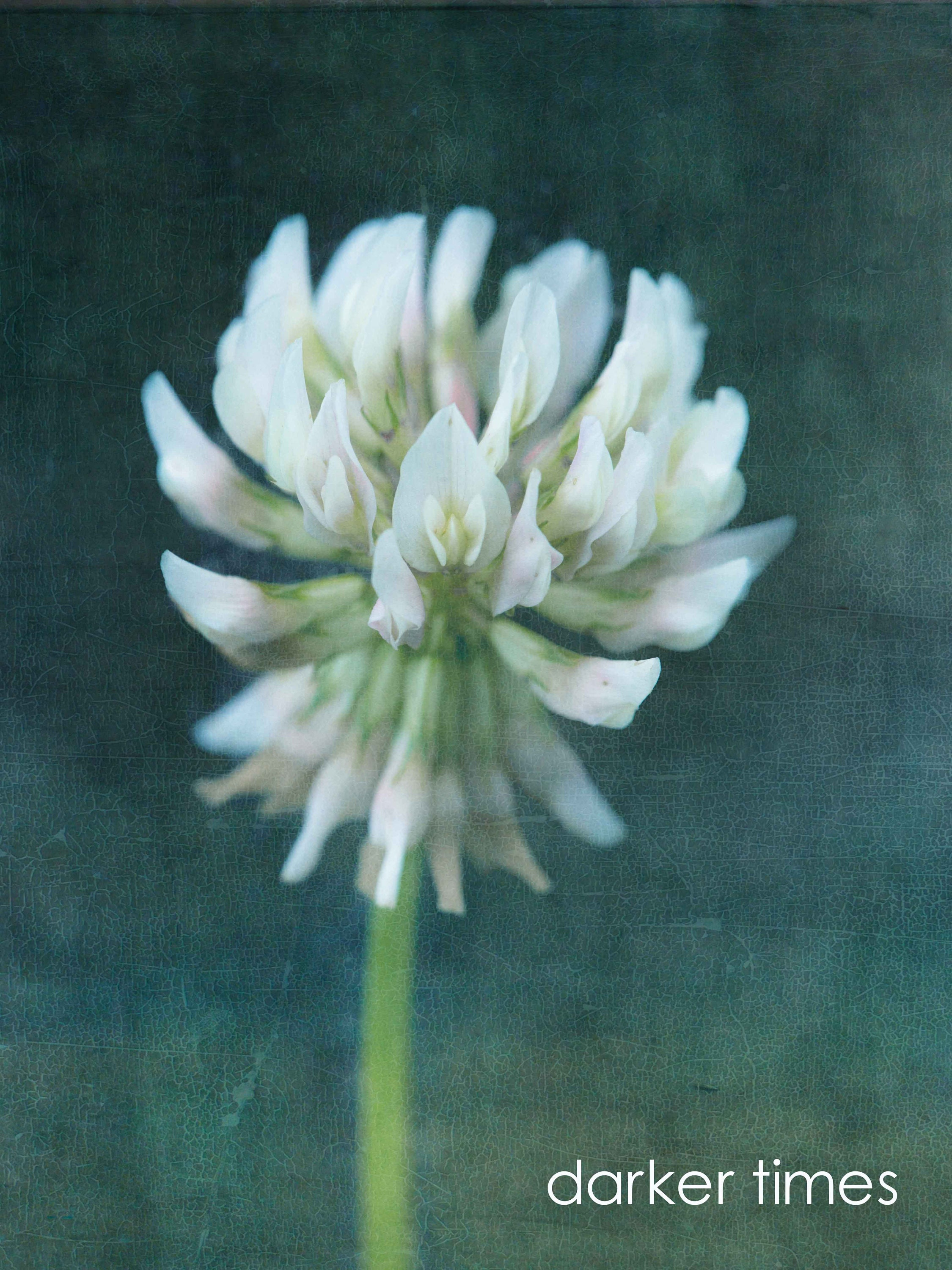 green and white clover flower canvas wall art- limited edition prints on affordable art fair- custom sizes
