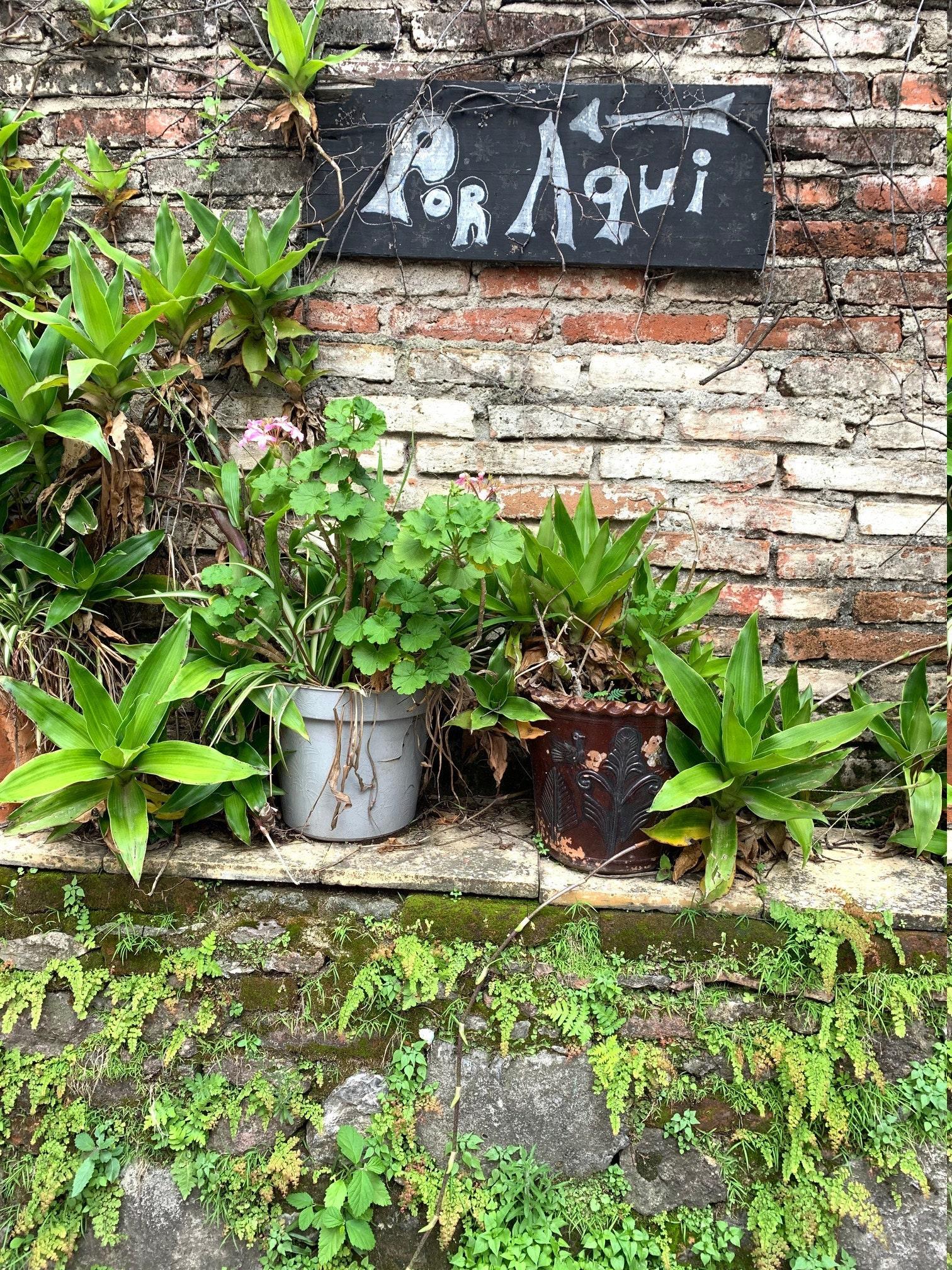 platas flower inspiration México, Mexican gardens, Mexico jewelr, Mexico silver, taxco