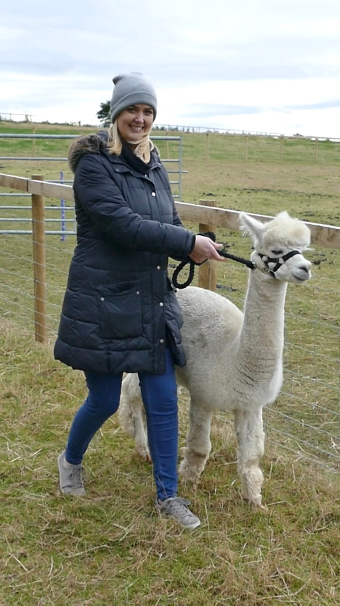 On our Alpaca walk at Barnacre Farm