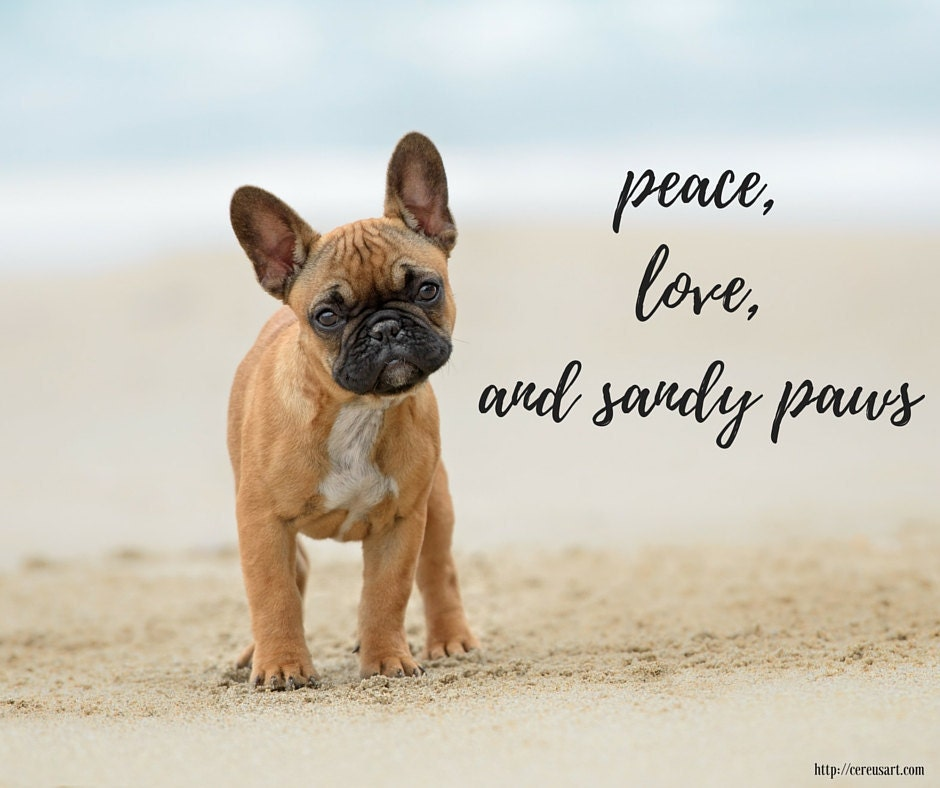Peace, love, and sandy paws