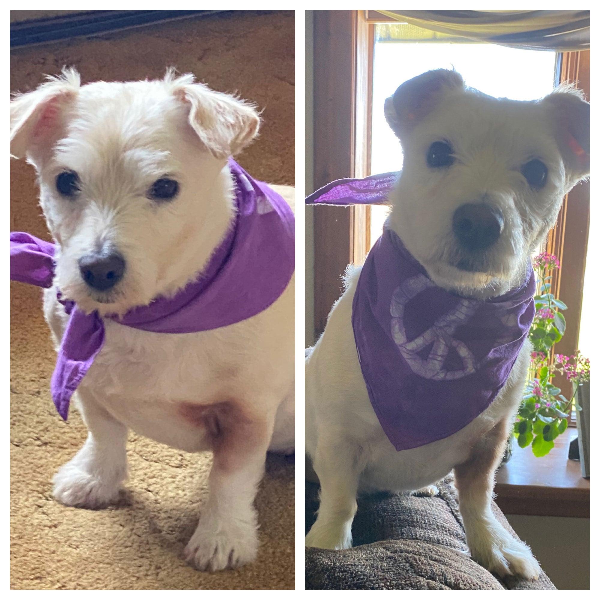 Peace, Baby! dog bandanas