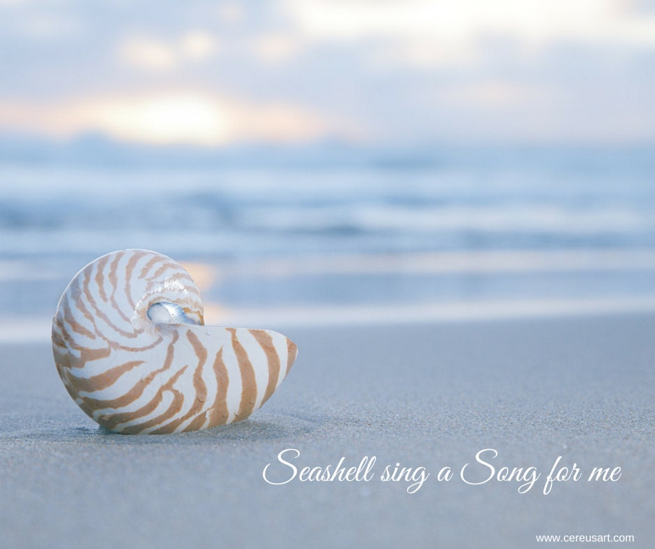 Seashell sing a song for me