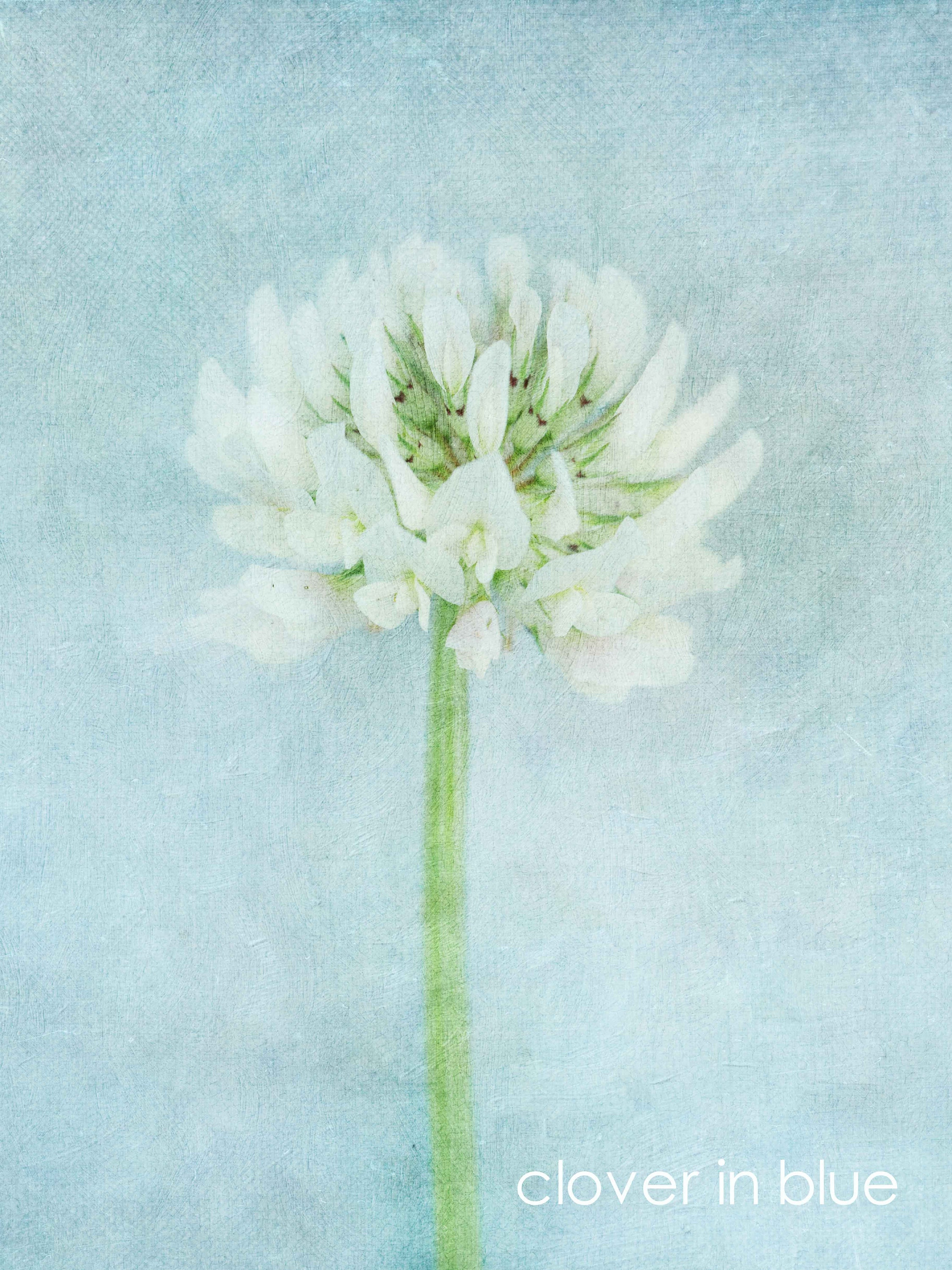PALE BLUE AND white floral canvas wall art- unframed prints on affordable art fair- christmas market gifts ideas