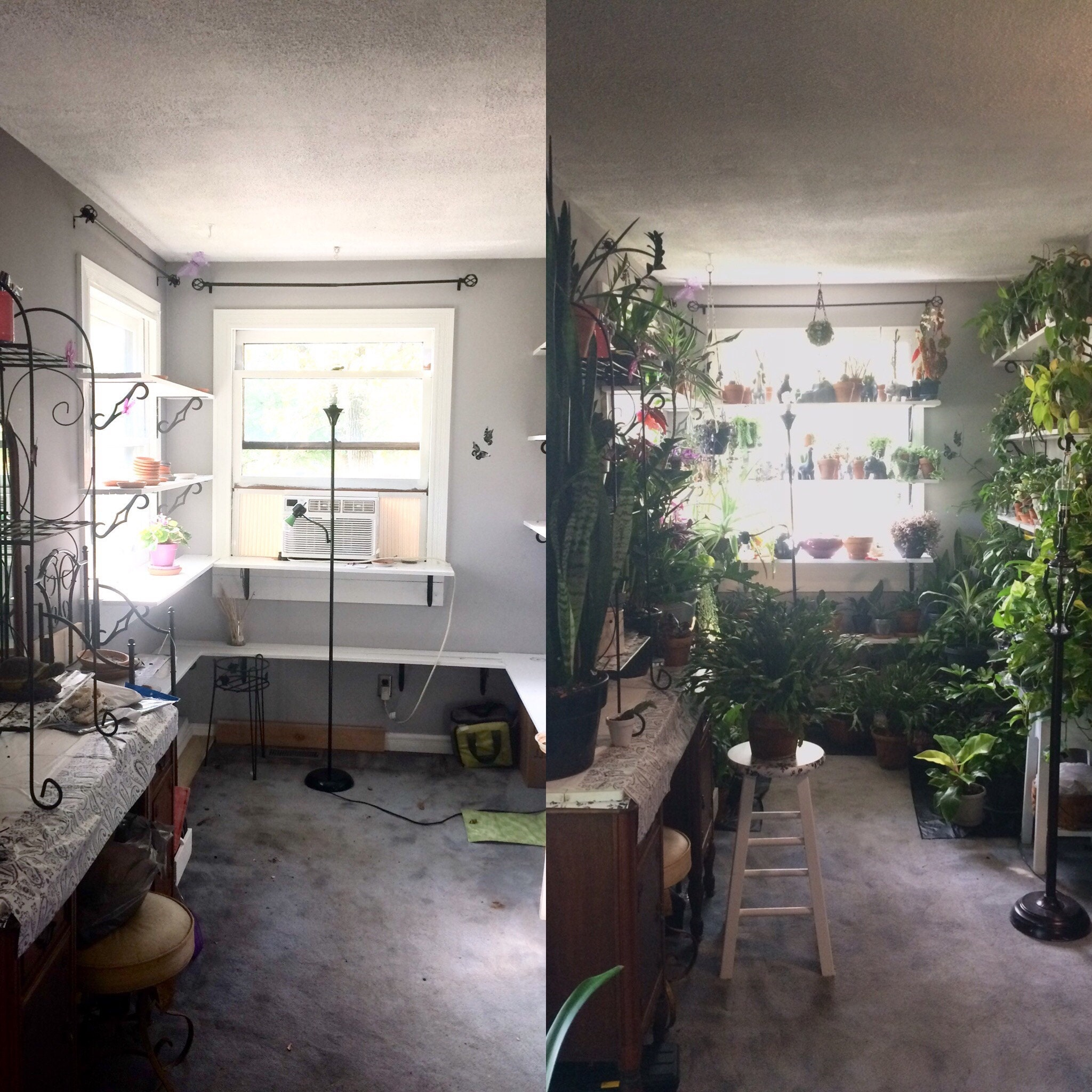 The transformation from summer to winter - its so barren and empty without the plants!