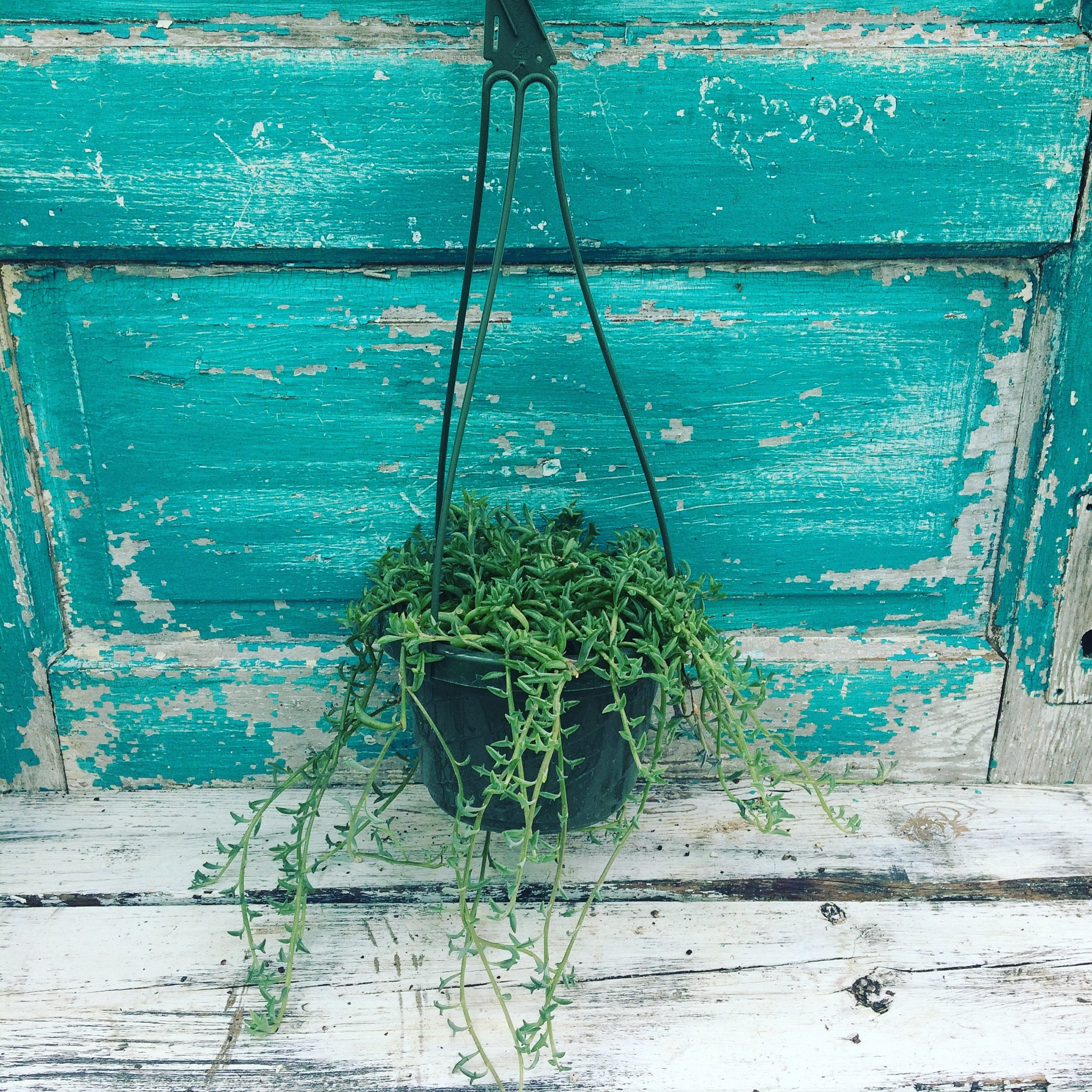 Our 6 hanging basket, available in the shop