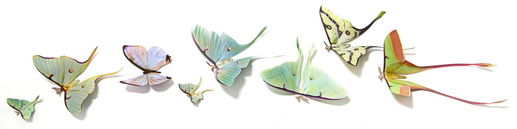About Us   Moth and Myth