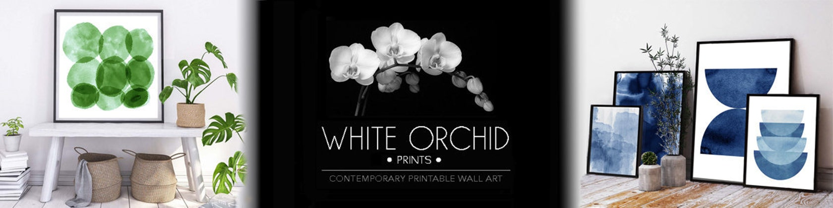 Print Art Print Picture Poster Print Wall Art Orchid III Wedgwood White