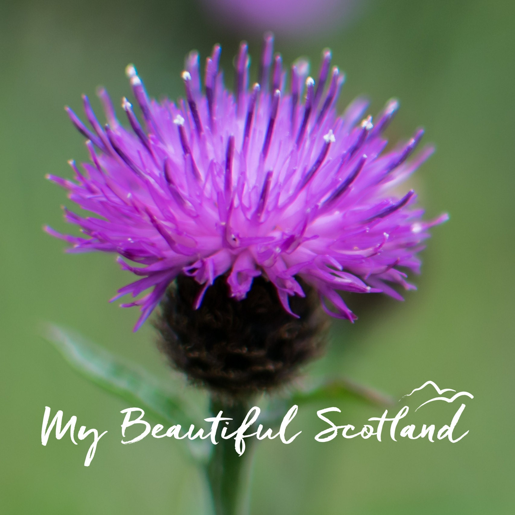 Highland Cow Print Scottish Greeting Card Cards From Etsy