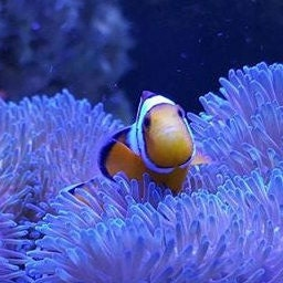 Turning Ideas Into Solutions By Reefgeek3dprinting On Etsy
