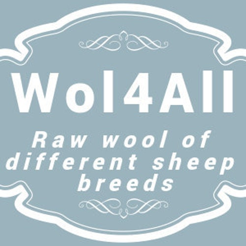 2KG RAW 1st CLIP//SHEARLING SHEEP FLEECE