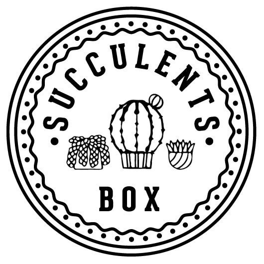 Succulents Farm From California By Succulentsbox On Etsy