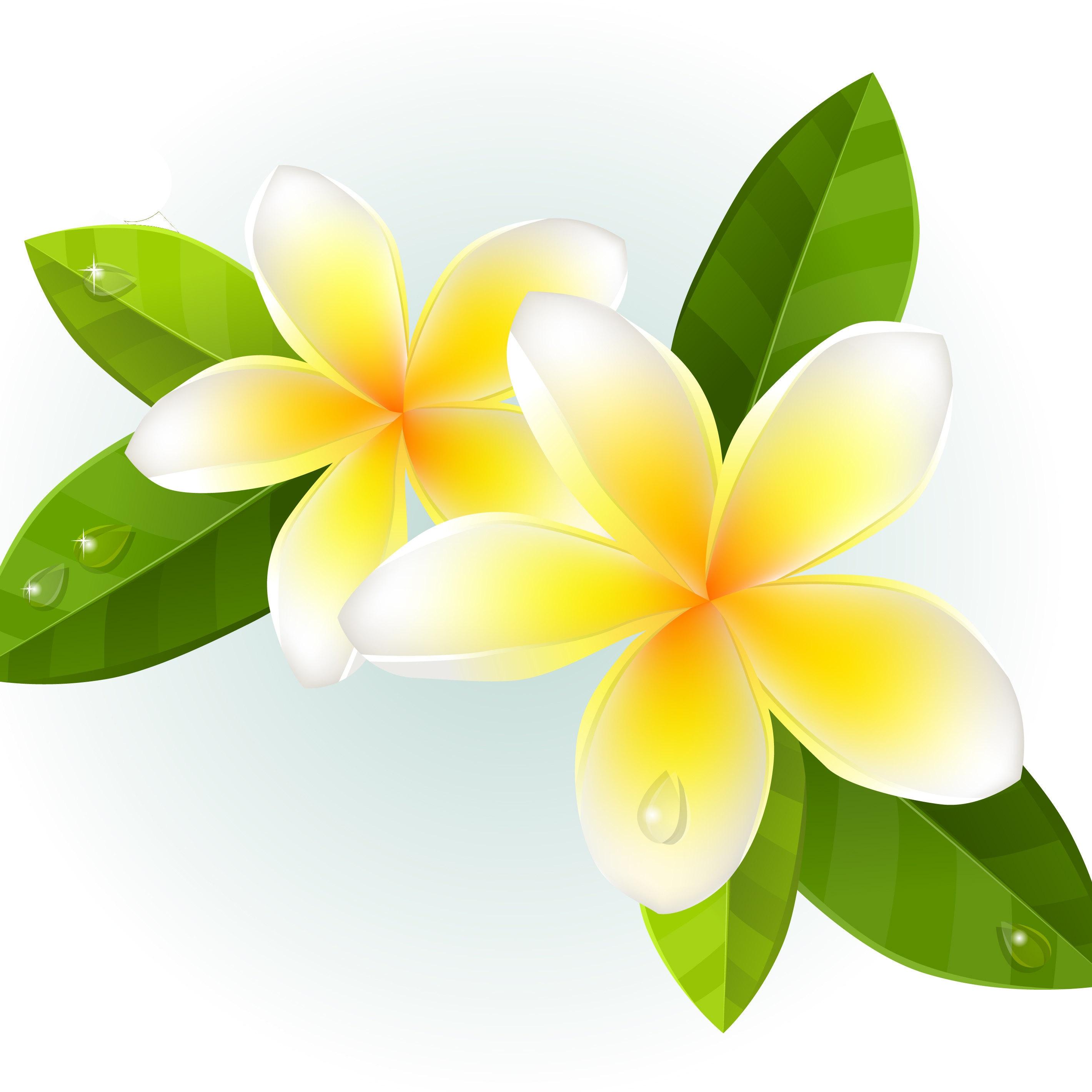 Hawaiian perfume with passion flower mango and lychee gift etsy alohanaturals izmirmasajfo