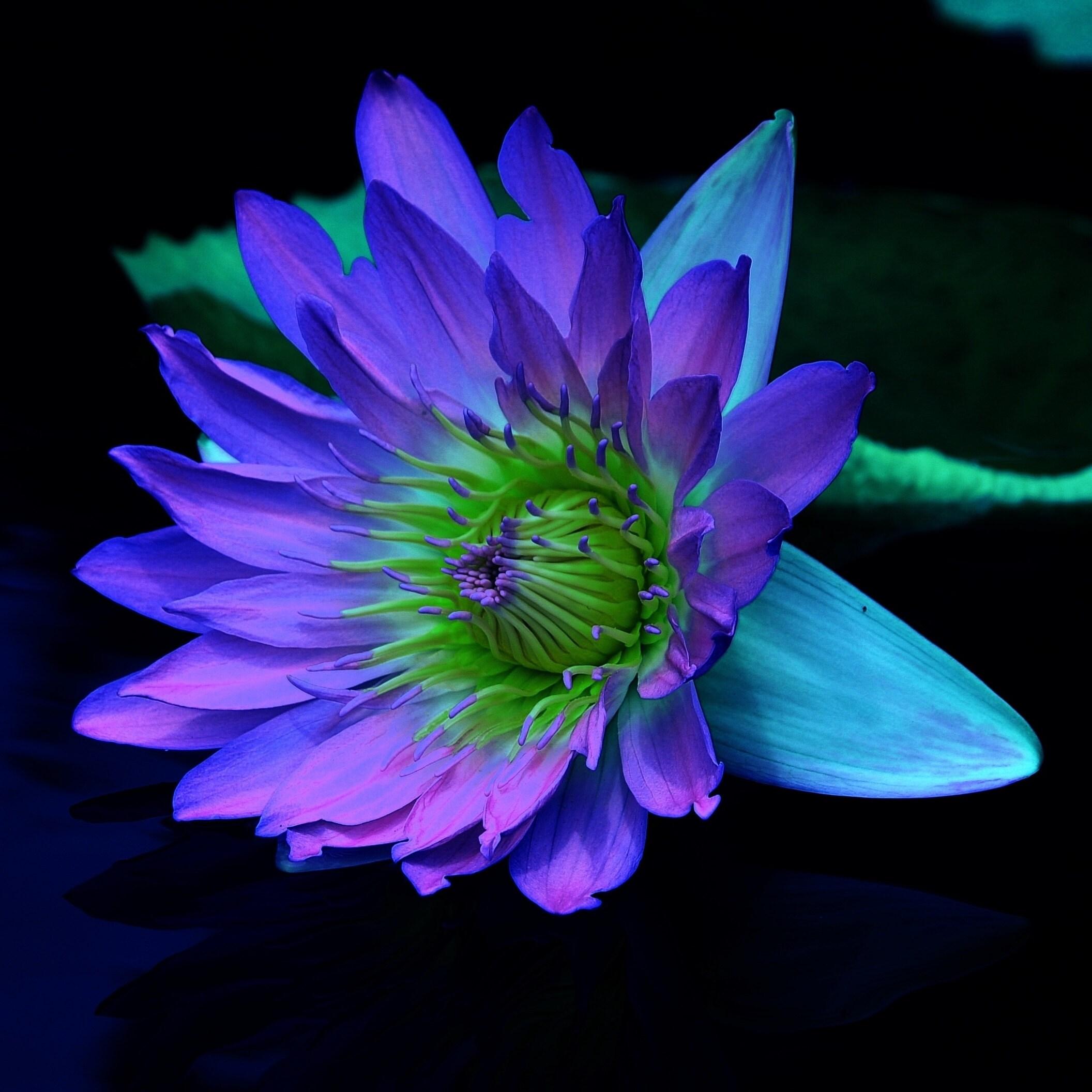 Happy birthday lily lotus card folded horizontal note cards etsy izmirmasajfo