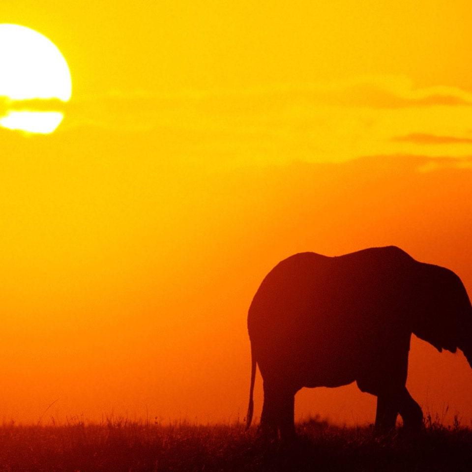 Картинки к презентации слоны