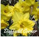 DaffodilCorner