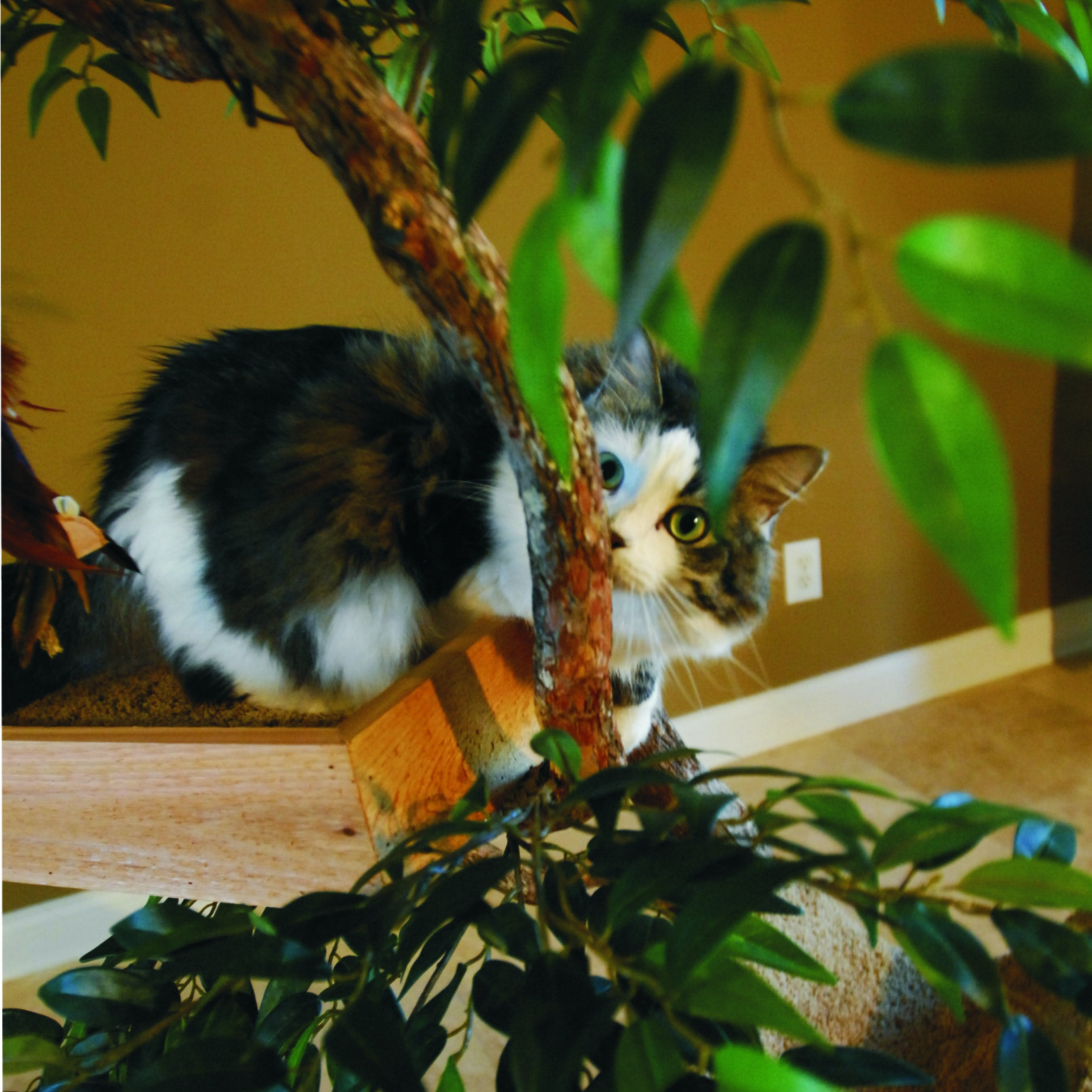 Purrveyors of Natural Feline Fun by PetTreeHouses on Etsy