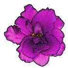 VioletsBaubles