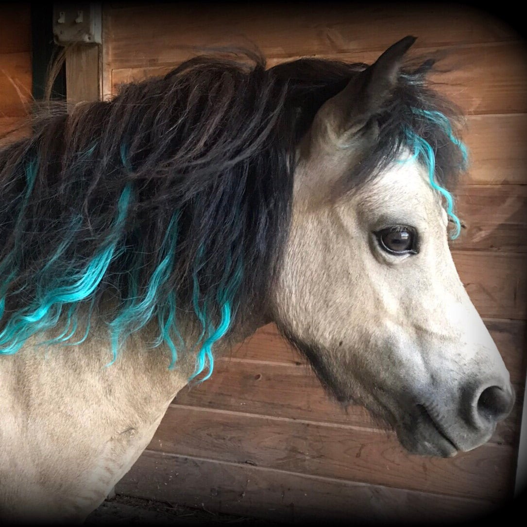 Orange Mane Hair Extensions For Horses Etsy