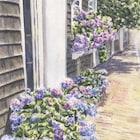 LeighBarryWatercolor