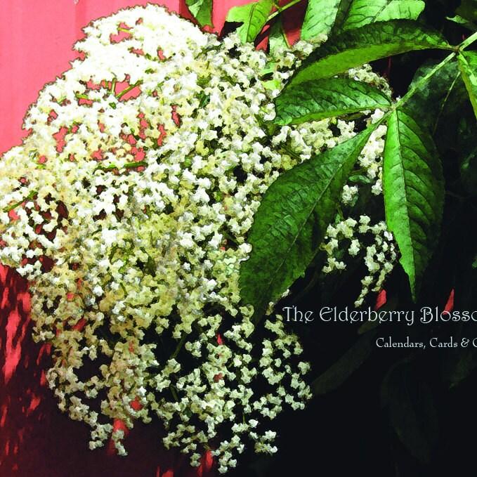 TheElderberryBlossom