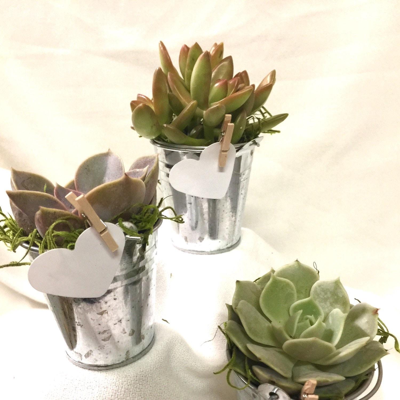 12 Succulent bucket favors Assorted Premium succulents gifts