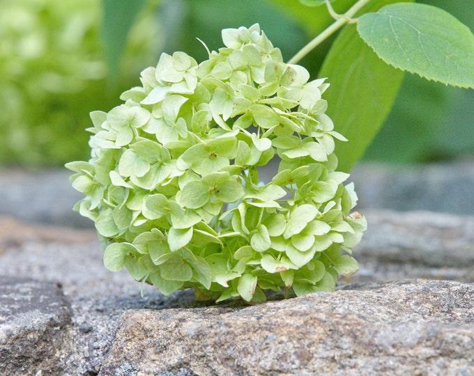 Flower & Nature