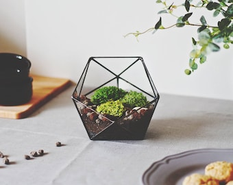 Medium Terrariums