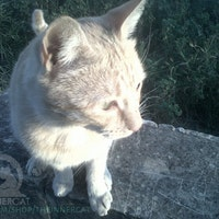 Profile picture of TheInnerCat